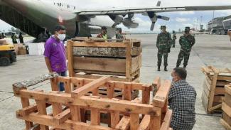 VIVA Militer: Panglima TNI Sumbang 59 ekor Babi hutan untuk Kepala Suku Papua