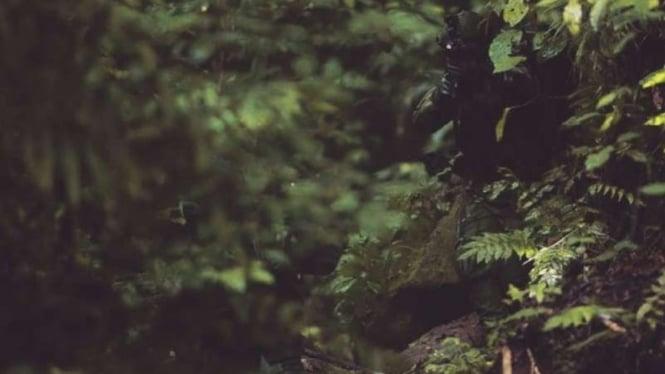 VIVA Militer: Pasukan Kopassus di hutan dengan seragam baru.