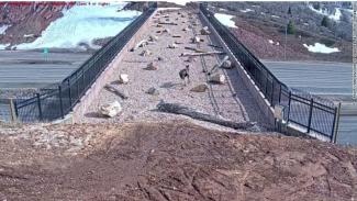 Jembatan penyebarangan untuk satwa liar di Utah, AS.