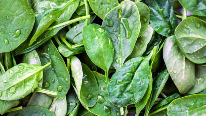 Bayam jenis baby spinach