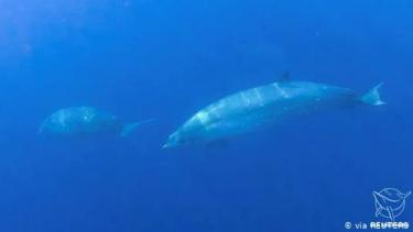 https://thumb.viva.co.id/media/frontend/thumbs3/2020/12/10/5fd1ff1f4e2d9-ilmuwan-temukan-spesies-paus-baru-di-lepas-pantai-meksiko_375_211.jpg