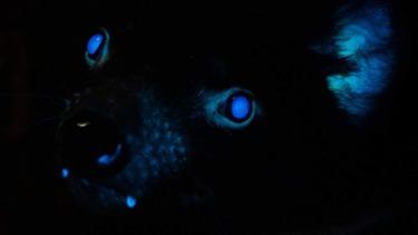 https://thumb.viva.co.id/media/frontend/thumbs3/2020/12/12/5fd40992d652a-penemuan-baru-sejumlah-hewan-australia-mengeluarkan-cahaya-di-bawah-sinar-uv_375_211.jpg