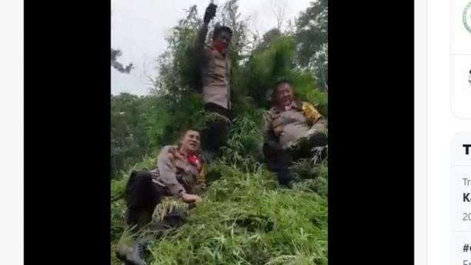 video Kapolda Aceh, Inspektur Jenderal Wahyu Widada di tumpukan tanaman ganja