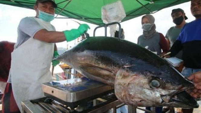 Ikan Tuna siap ekspor ke Eropa dan Amerika Serikat.