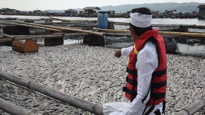 Puluhan ton ikan mati di Waduk Jatiluhur Purwakarta