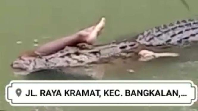 Tangkapan layar (screen shot) video yang memperlihatkan seekor buaya besar yang berenang di sungai dan mulutnya menyeret tubuh manusia viral di media sosial, disebut terjadi di Bangkalan, Madura, Jawa Timur.