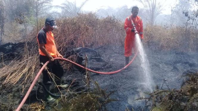 Petugas BPBD berjibaku memadamkan kebakaran lahan sawit milik warga di Kecamatan Tanjung Mutiara, Kabupaten Agam, Sumatera Barat, Senin, 15 Februari 2021.