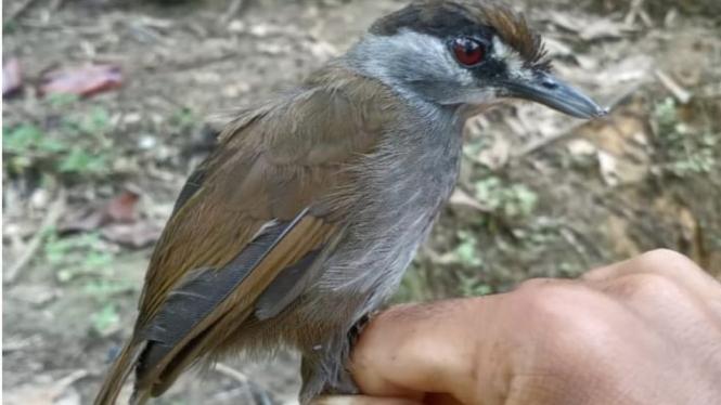 Burung Misterius Ditemukan Warga di Kalimantan