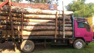 Polisi mengamankan kayu hasil illegal logging di Jambi