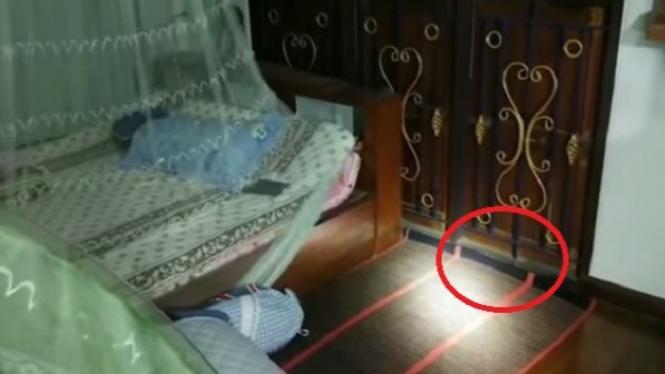 Ular king kobra di kamar.