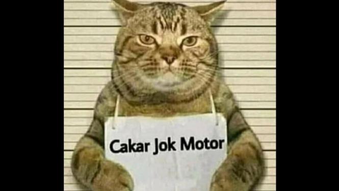 Bagi kucing, mencakar benda apapun di sekitarnya merupakan rutinitas untuk mengasah kekuatan cakarnya