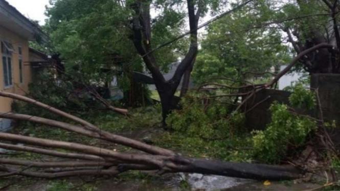 Sejumlah pohon tumbang di Kota Kupang saat terjadi badai siklon tropis seroja melanda hampir seluruh wilayah Nusa Tenggara Timur (NTT) pada 3-4 April 2021.