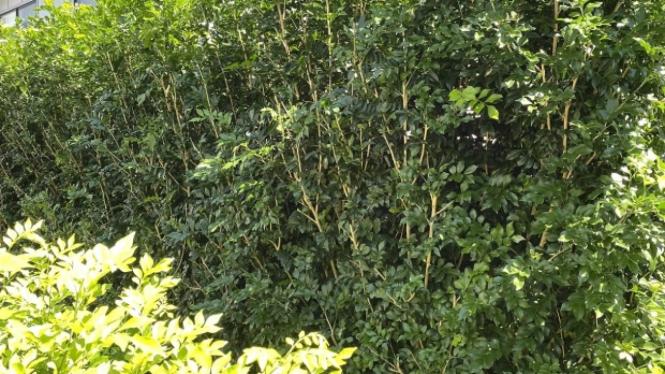 Temukan wujud binatang ular tersembunyi di antara gambar tanaman ini