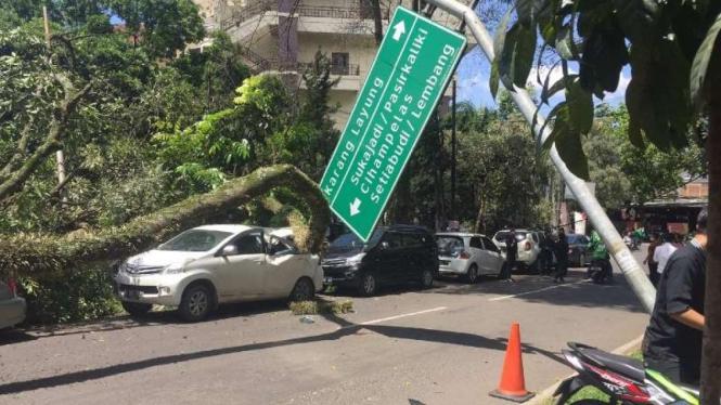 Lima mobil ambruk ditimpa pohon di Bandung