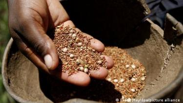https://thumb.viva.co.id/media/frontend/thumbs3/2021/04/09/607016476e69c-monopoli-benih-siapa-yang-mengontrol-pasokan-pangan-dunia_375_211.jpg