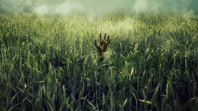 Cuplikan Film In The Tall Grass