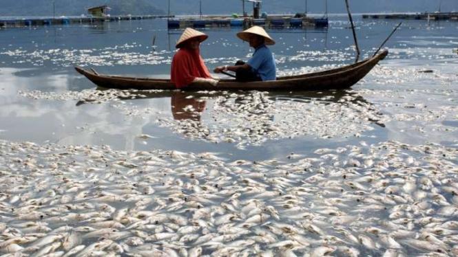 Ikan mati mendadak secara massal di Danau Maninjau, Agam, Sumatera Barat.