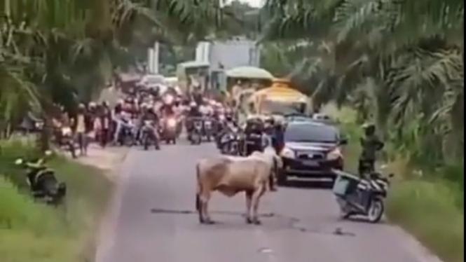 Sapi di tengah jalan bikin para pengendara berhenti (Foto/Instagram/lambe_turah)
