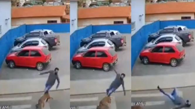 Viral penyebarang jalan tertabrak anjing (Instagram/ndorobeii)