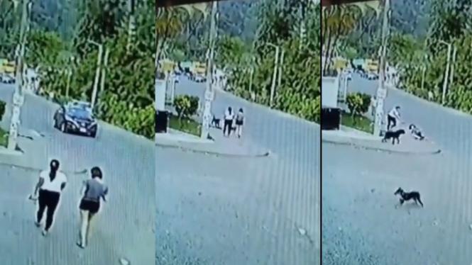 Viral detik-detik wanita tertabrak anjing di jalan (Instagram/energisolo)