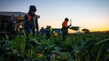 https://thumb.viva.co.id/media/frontend/thumbs3/2021/06/19/60cd5b7d29931-kelompok-advokasi-peringatkan-visa-pertanian-australia-bagi-pekerja-asal-asean-mengarah-ke-eksploitasi-massal_375_211.jpg