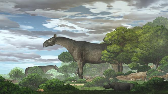 Fosil Badak Raksasa Ditemukan di China, Lebih Tinggi dari Jerapah