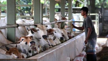 https://thumb.viva.co.id/media/frontend/thumbs3/2021/07/22/60f92dec9c1eb-peningkatan-kasus-covid-19-di-indonesia-terasa-dampaknya-bagi-eksportir-sapi-australia_375_211.jpg