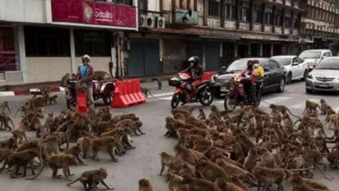 Penampakan tawuran monyet tumpah di jalanan di Thailand