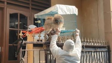 https://thumb.viva.co.id/media/frontend/thumbs3/2021/08/01/6105a28cc105e-cerita-relawan-penyelamat-hewan-peliharaan-milik-penderita-covid-19-bagi-saya-mereka-seperti-malaikat_375_211.jpg