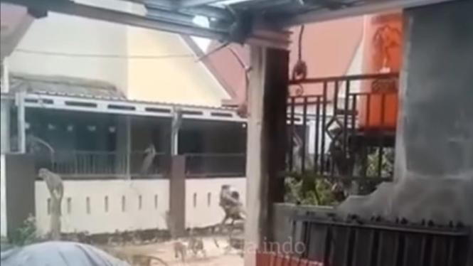 Viral Gerombolan Monyet Serang Rumah Warga (Instagram/fakta.indo)