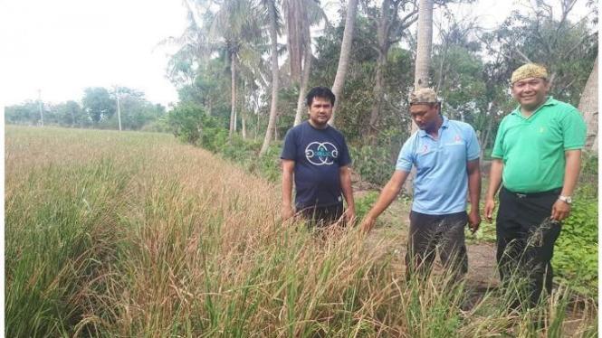 Bisa langsung berikan insentif subsidi pupuk ke petani desa.