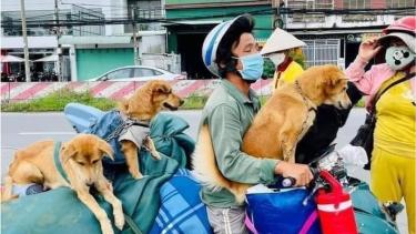 https://thumb.viva.co.id/media/frontend/thumbs3/2021/10/14/6167e3a3294a6-belasan-anjing-di-vietnam-dibunuh-pihak-berwenang-karena-dikhawatirkan-tertular-covid-pemiliknya-menangis-aku-tak-bisa-melindung-anak-anakku_375_211.jpg