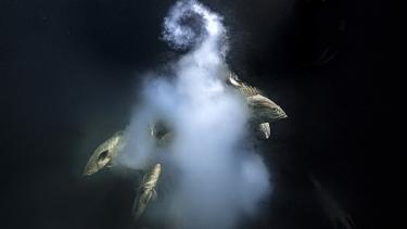 https://thumb.viva.co.id/media/frontend/thumbs3/2021/10/14/61682b655d8d6-penghargaan-fotografer-alam-liar-terbaik-seks-eksplosif-ikan-kerapu-sabet-anugerah-tertinggi_375_211.jpg