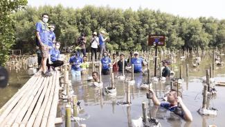 Aksi para Duta Besar Uni Eropa menanam Mangrove