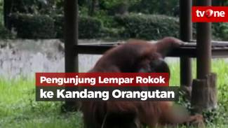 https://thumb.viva.co.id/media/frontend/vthumbs2/2018/03/08/orangutan_5aa0d9415f19f_viva_co_id_325_183.jpg