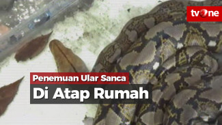 https://thumb.viva.co.id/media/frontend/vthumbs2/2018/04/02/ular-sanca-batik-di-atap-rumah-warga_5ac1cab5ea045_viva_co_id_325_183.jpg