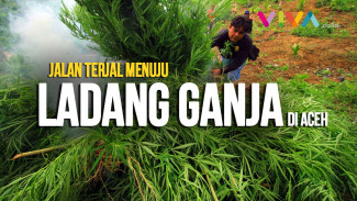 https://thumb.viva.co.id/media/frontend/vthumbs2/2018/10/12/pemusnahan-ladang-ganja-cms_5bc0695d14c2d_viva_co_id_325_183.jpg