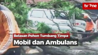 https://thumb.viva.co.id/media/frontend/vthumbs2/2019/12/09/belasan-pohon-tumbang-timpa-mobil-dan-ambulans_5dedd19546e8b_viva_co_id_325_183.jpg